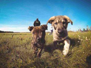 https://www.vetstudio.it/wp-content/uploads/2015/11/vet_00018-320x240.jpg