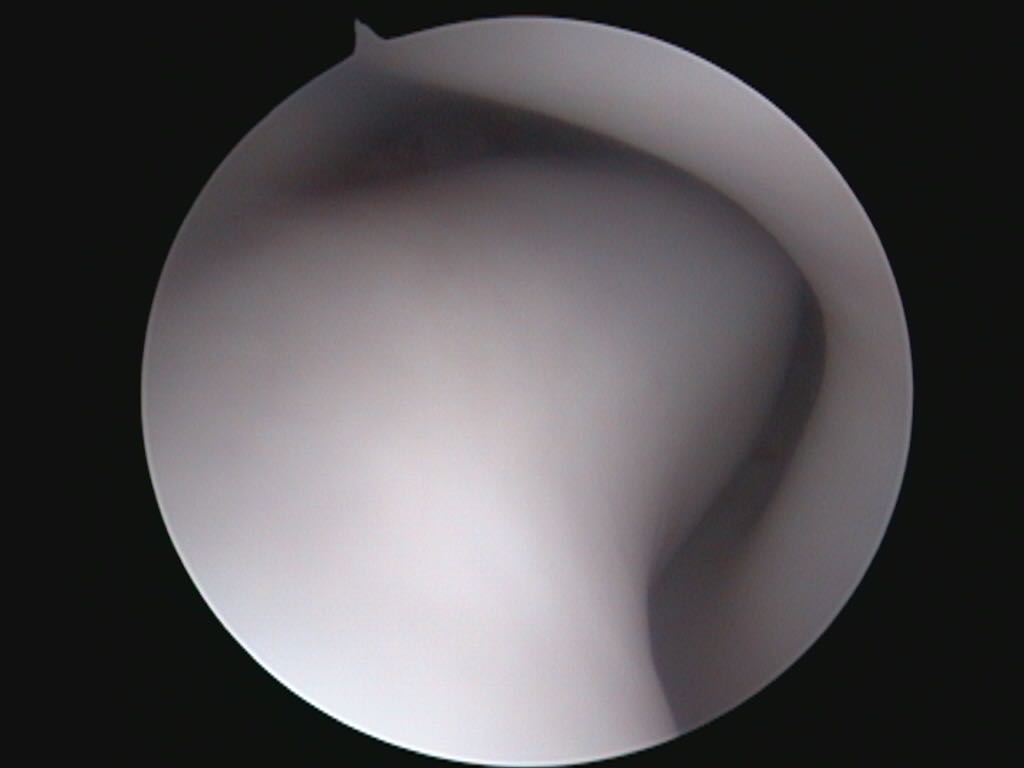 https://www.vetstudio.it/wp-content/uploads/2018/05/endoscopia-diagn1.jpg